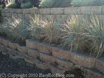 California drought resistant native plants