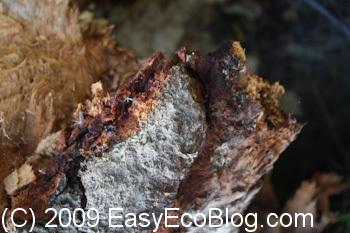 termite, orange oil, termites